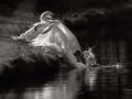 Zwanen paartje met tegenlicht gefotografeerd en omgezet in zwart/wit. (februari 2020)