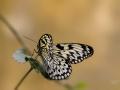 Tropische vlinderjungle Vlinders aan de Vliet is een kleine overdekte dierentuin. Tropische jungletuin: een oerwoud vol vlinders en anders kleine jungledieren. (april 2018)
