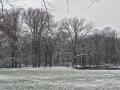 Sneeuw op Landgoed Oosterbeek op een koude dag. (januari 2021)