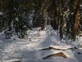 Doorkijk in het Hyacintenbos in de sneeuw. (februari 2021)