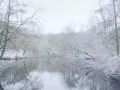 Winter in Nederland, Clingendael. (januari 2021)