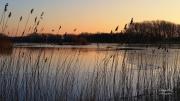 Uitzicht op het aalscholver eiland. Renbaanveld Amsterdamse Waterleidingduinen. Er lag een dun laagje ijs op het water. Vanaf 1844 galoppeerden er hier nog paarden op het Renbaanveld. Bezoekers vergokten er tijdens races veel geld. In 1850 moest de renbaan sluiten. Nu is het een Infiltratiegebied/Geul. Veel watervogels maken gebruik van dit prachtige watergebied. (februari 2016)