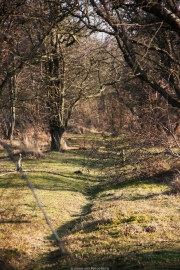 Kijfhoek en Bierlap is een midden duingebied met de grote valleien. Het is één van de grote deelgebieden in noordelijk Meijendel met een natuurlijk karakter. De valleien zijn verdroogd en hebben een bosachtig karakter gekregen. (februari 2015)