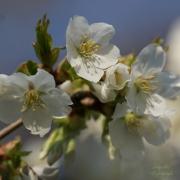 Serie van verschillende lentebloemen. (februari, maart 2021)