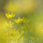 Serie van verschillende lentebloemen. (april, mei 2021)