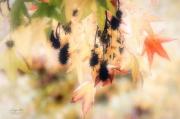 Tears-in-the-rain. Japanse esdoorn met vruchten. Met tegenlicht gefotografeerd. (oktober 2019)
