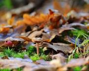 Holland, de natuur in de herfst. (november 2015)