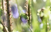 Hyacintenbos Ockenburgh. Het ontluiken van een varen. (april 2020)