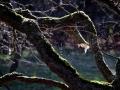 Een spinnenweb is een door spinnen gemaakte constructie bestaande uit spinsel, dat meestal dient als vangnet voor vliegende of springende prooien. Een spinnenweb heeft typische eigenschappen. De draden zijn zo dun dat ze niet worden opgemerkt door vliegende insecten. (oktober 2018)